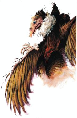 18. Aarakocra 1995 - Dark Sun Monstrous Compendium II.png