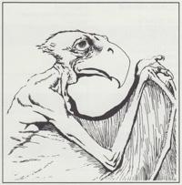 D&D Monster ENCyclopedia: Aarakocra
