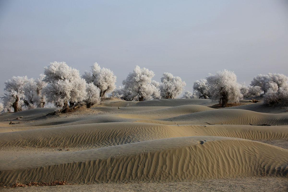 China, Xinjiang, Taklamakan Desert, trees with hoarfrost.jpg