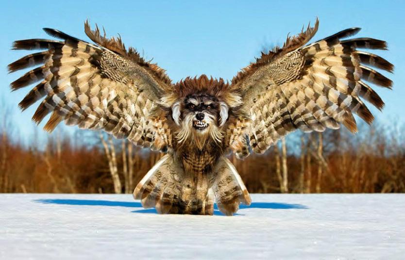 gorilla owl.jpg