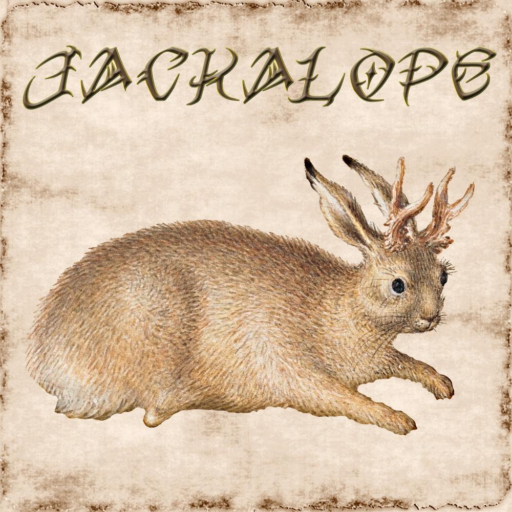 Jackalope BANNER 5e.jpg