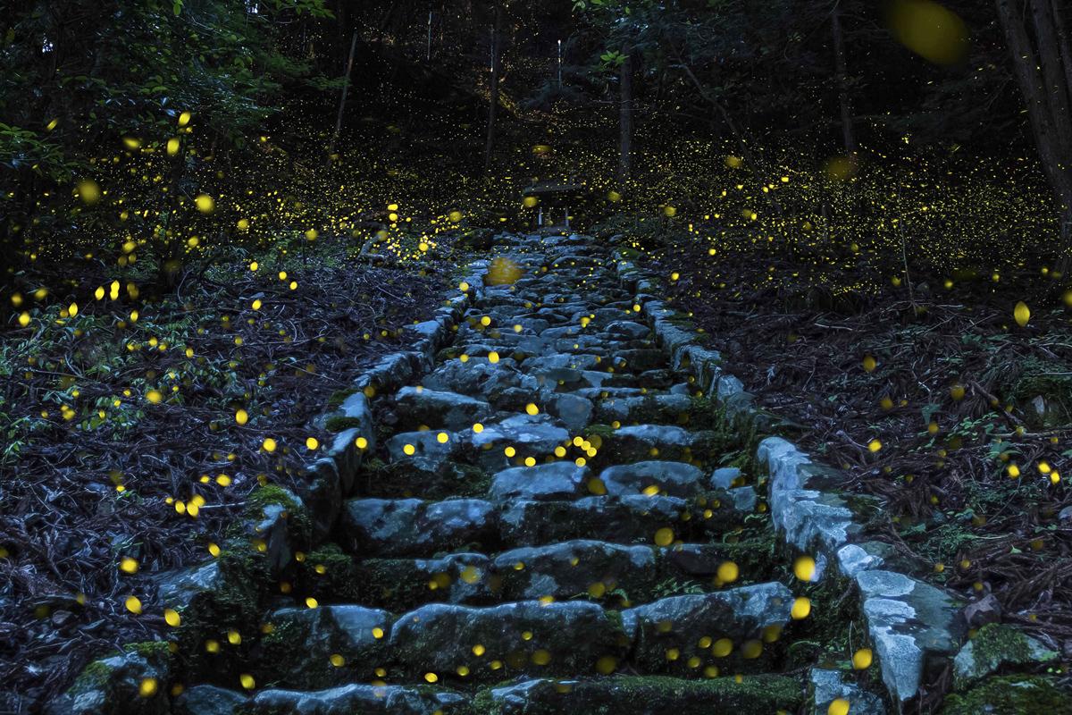 Japan, Village in Tamba, Princess Fireflies.jpg