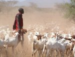 Young-Maasai-herder-sees-a-future-in-pastoralism-gritty.org_.jpg